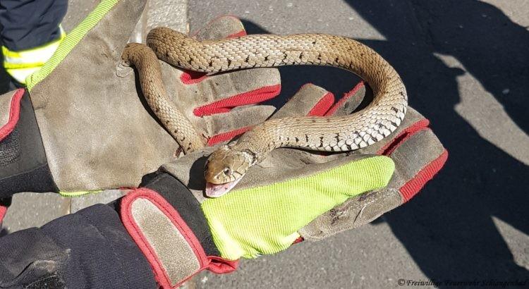 Schlangenrettung